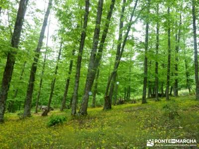 Castañar de El Tiemblo; excursiones viajes; viajes en otoño;parques naturales de la rioja